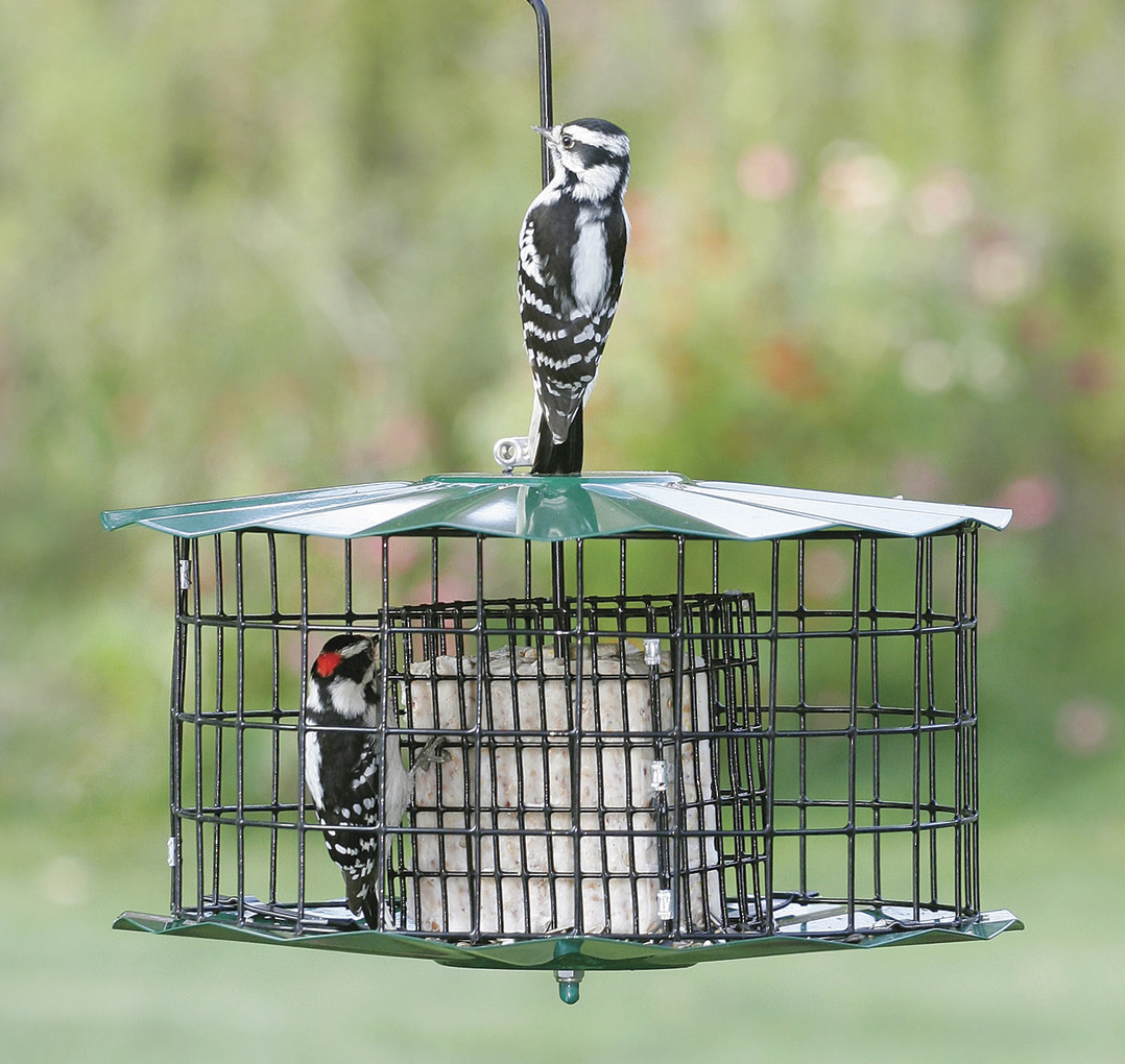 squirrel proof feeder suet base resistant shop
