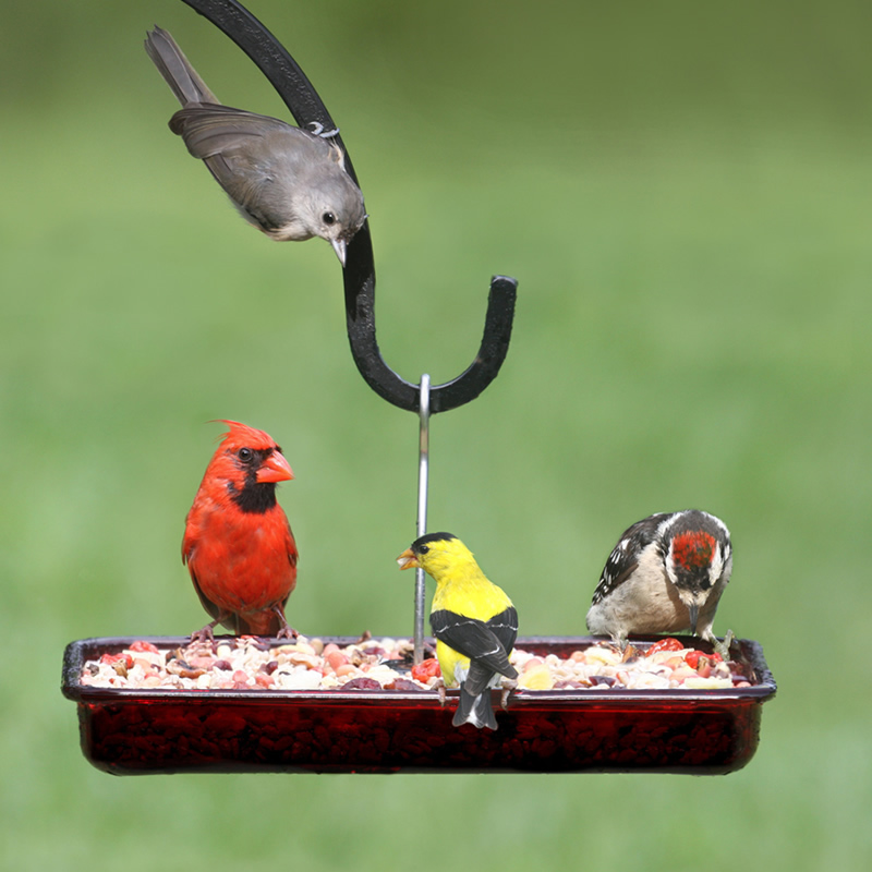 cardinal platform feeder