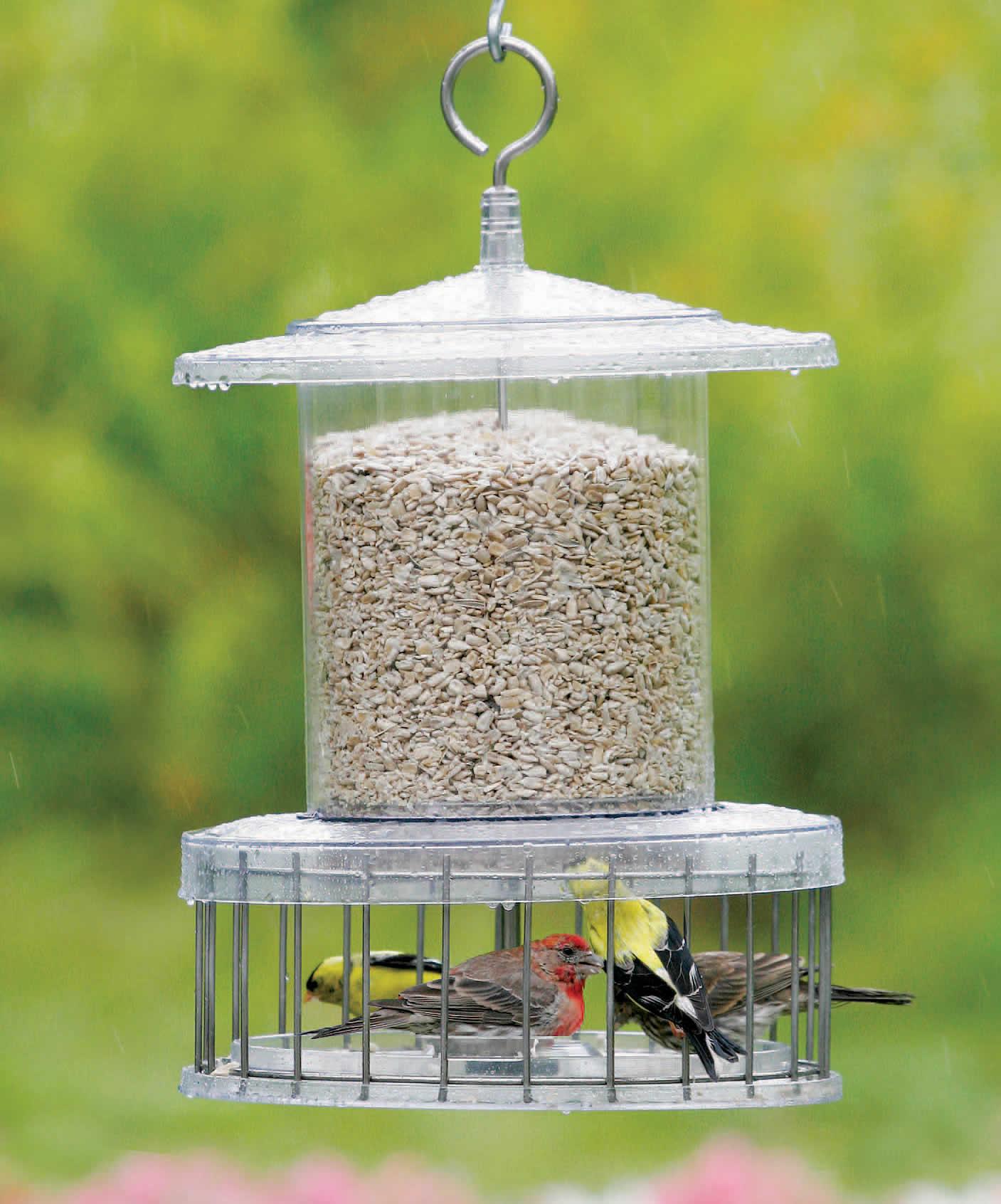 birds blue droll bluebirdnut feeders feeder backyard bluebird bird