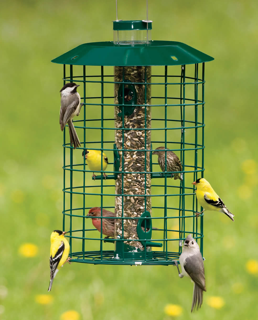 frustrated bird squirrel guide how husband feeder a brome s proof to
