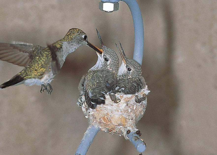 duncraft: hummingbird house