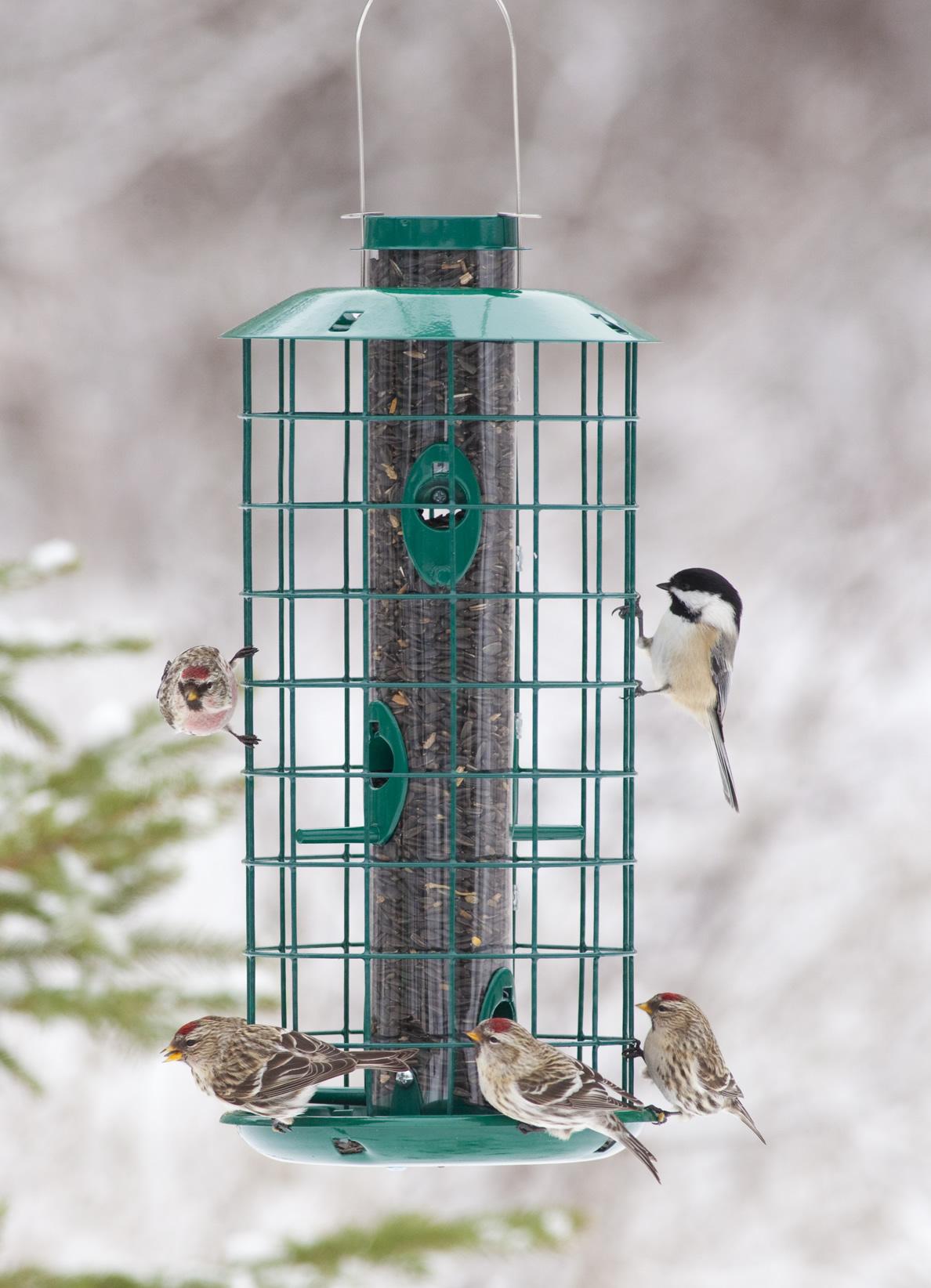 Duncraft.com: Duncraft 180M Metal Haven Bird Feeder