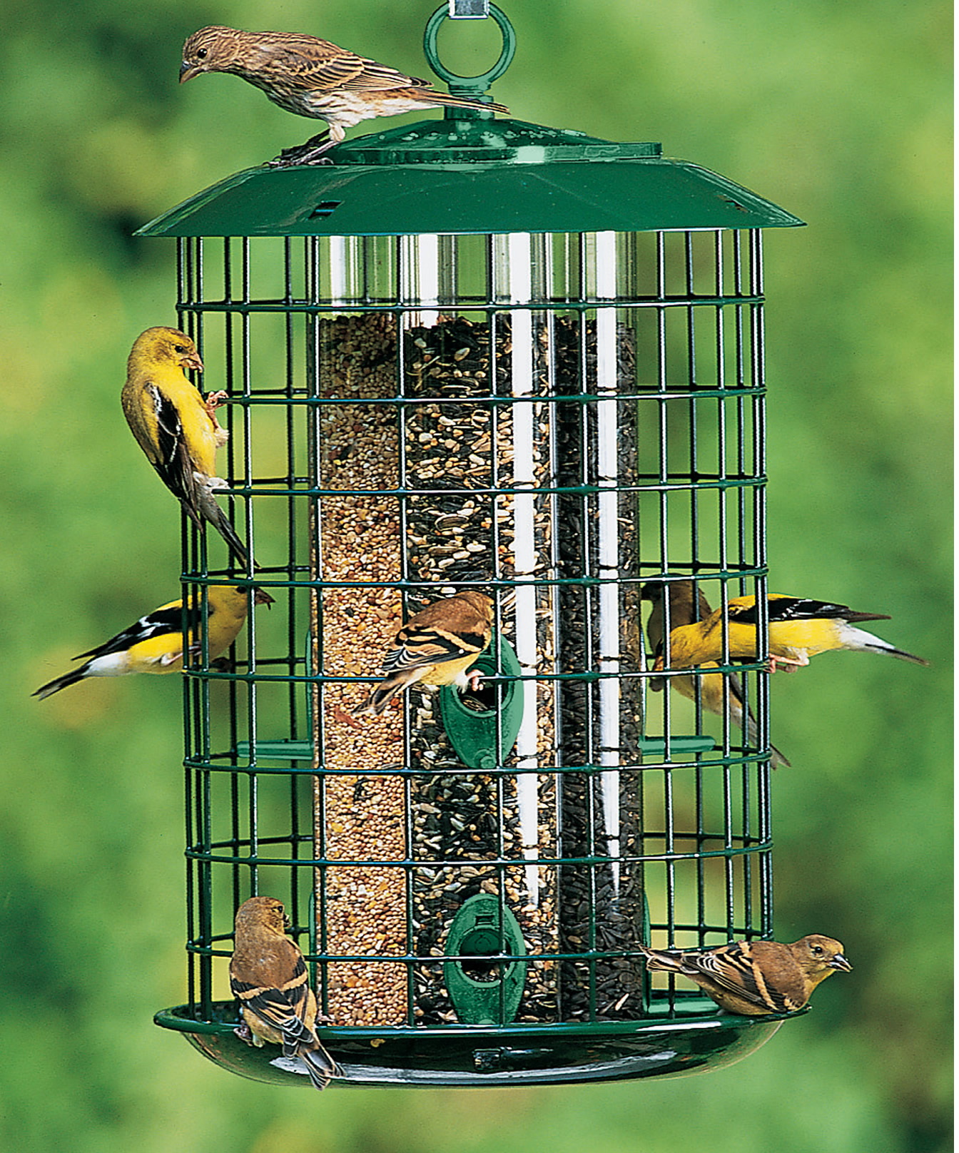 Duncraft 182m metal safe haven bird feeder for Types of birdhouses for birds