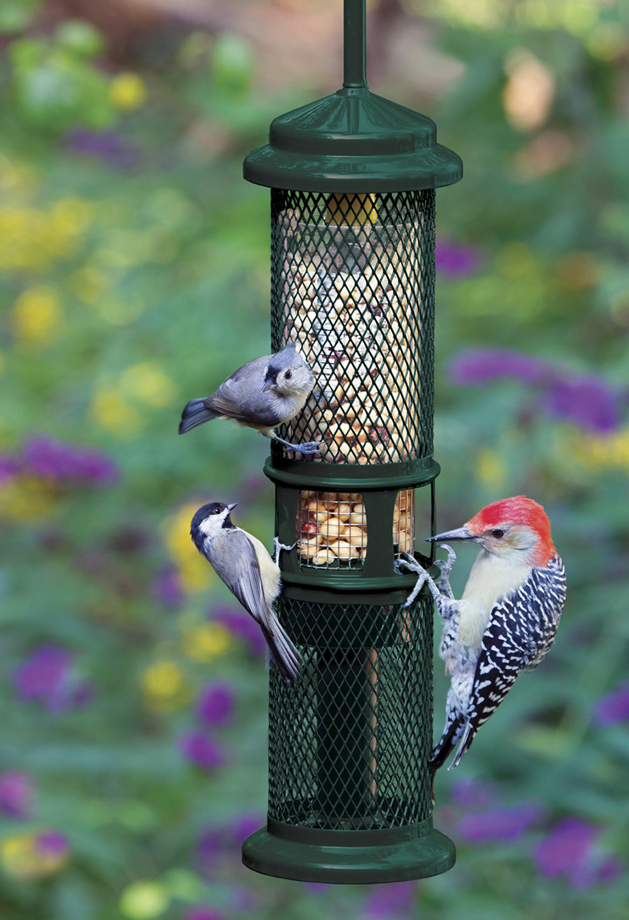 birdfeed brome available squirrel o products mountain proof bird buster wildlife supplies in caledon featured feeder
