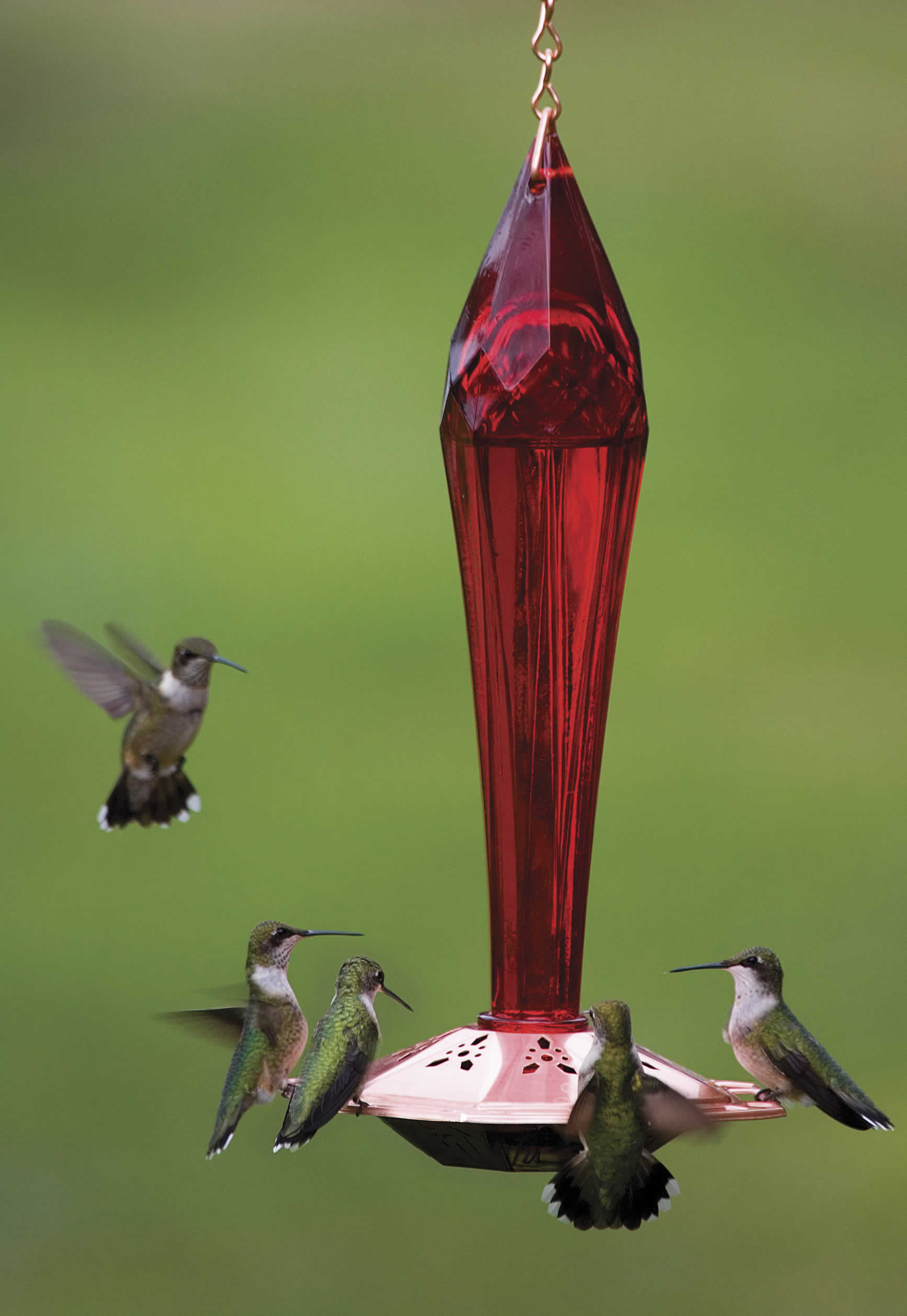 ounces pet blown yellow decorative home feeder natures birds feeders glass best with of premium reviews by unique hummingbird bird product red hummingbirds hand and rave products globe nectar