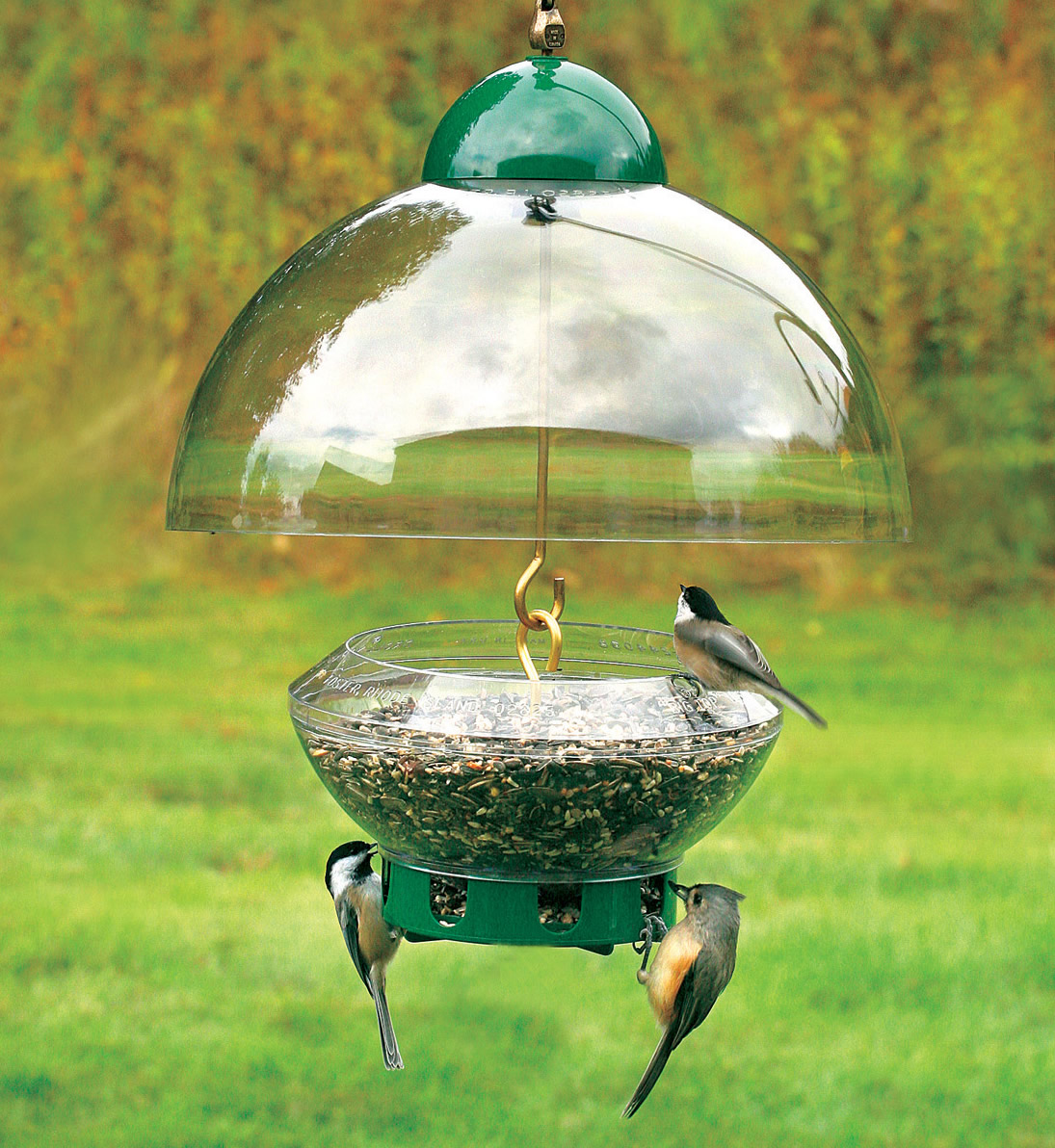 feeders cages feeder squirrel proof bird best