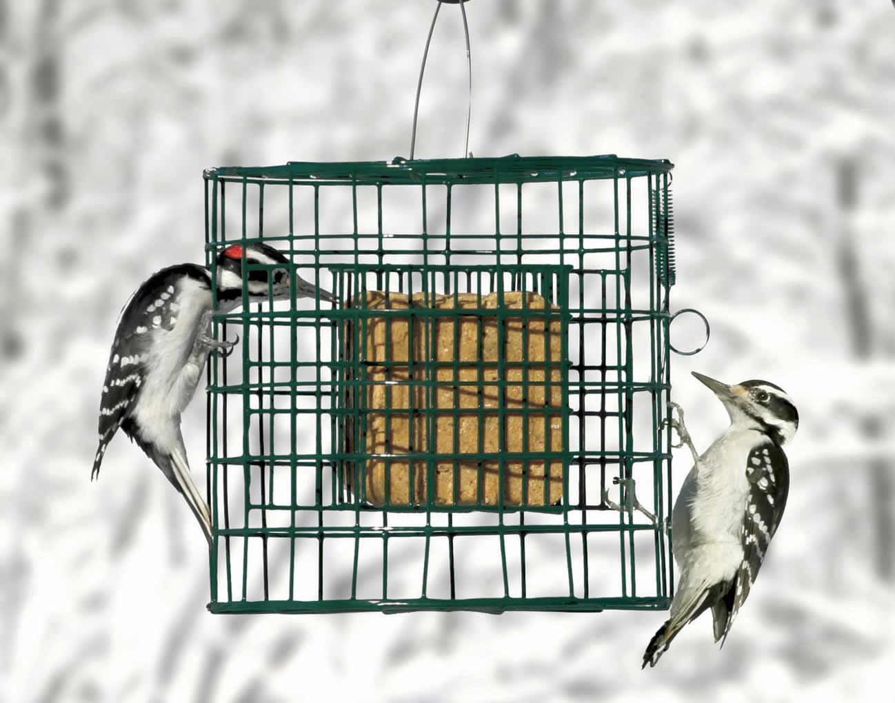 Duncraft.com: Duncraft 2692 Suet Sanctuary Bird Feeder