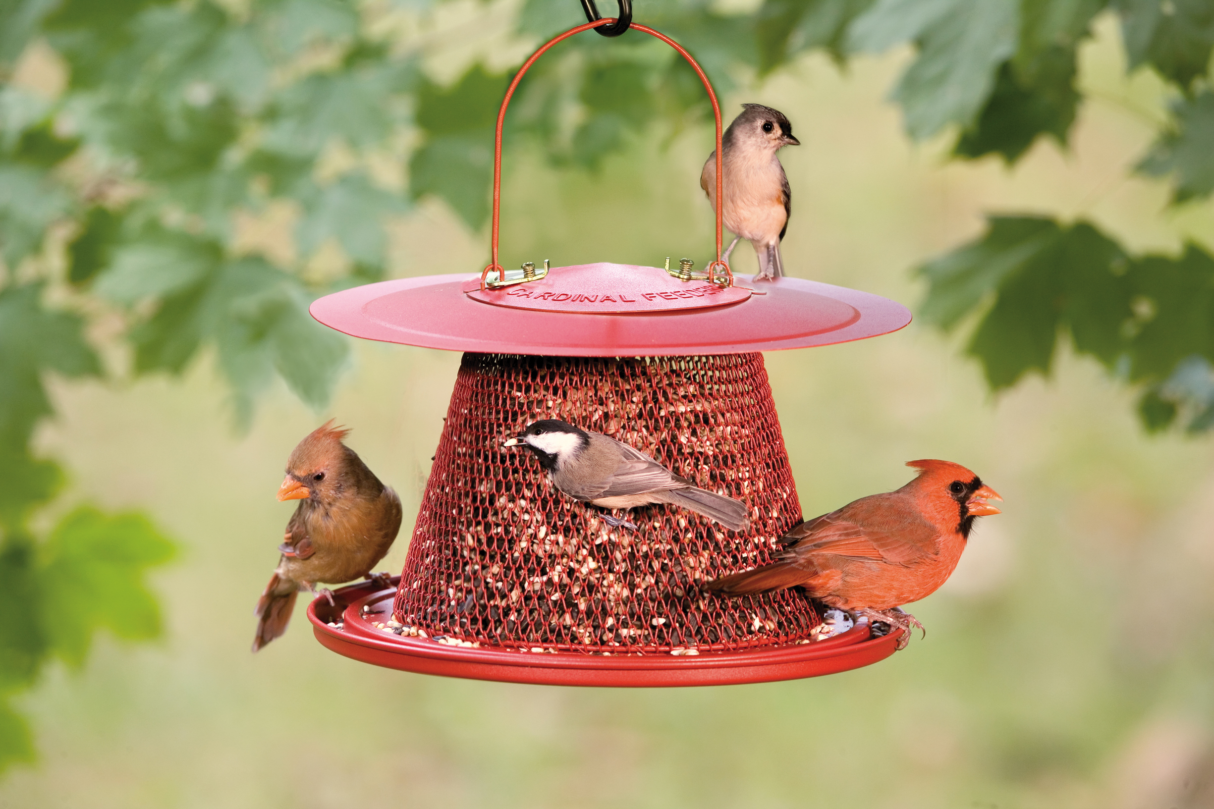 from feeding encouraging your starling bird small into feeder with update birds number garden ground