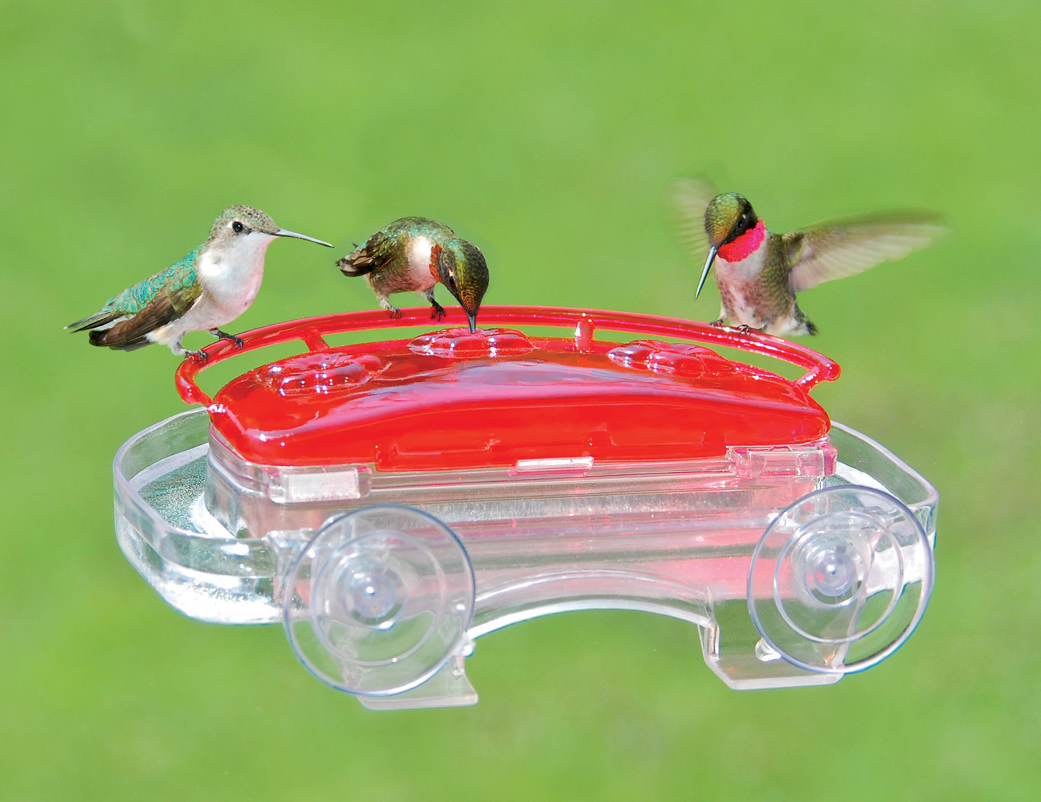 humingbird product rs feeder drollyankees in gd hummingbird droll ruby the clear window sipper