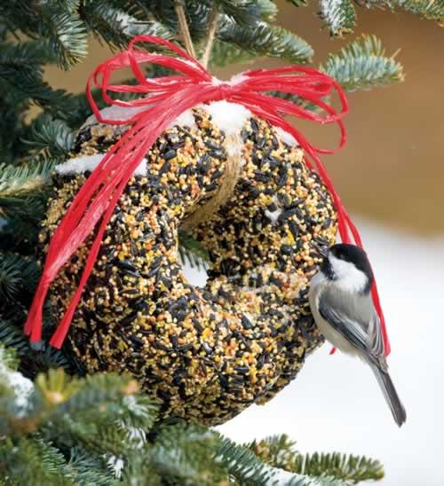 Duncraft Com Traditional Bird Seed Wreath