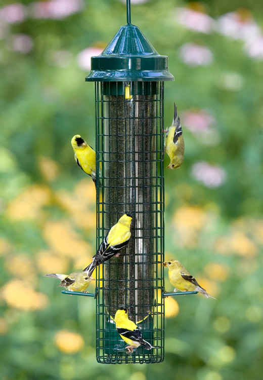 bird and at picture a male photo royalty stock house feeders feeder finch
