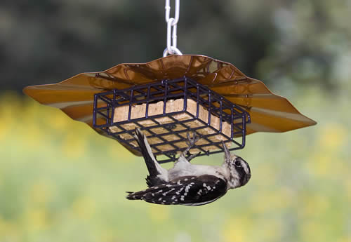 upside down disk suet feeder