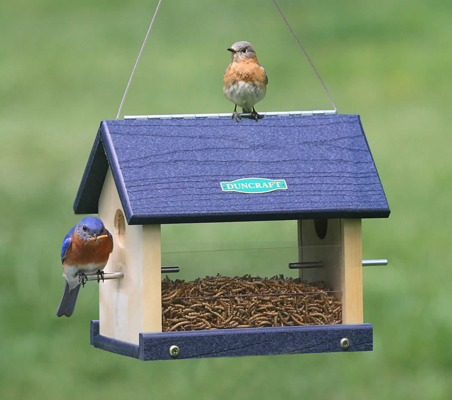 witting feeders and out blackbirds bird feeder downy blue index squirrels