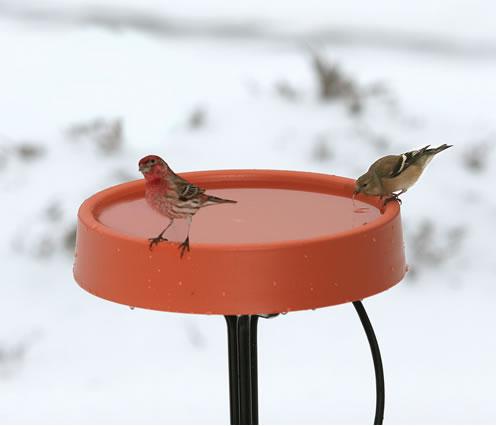 Duncraft.com: All-Seasons Heated Bird Bath