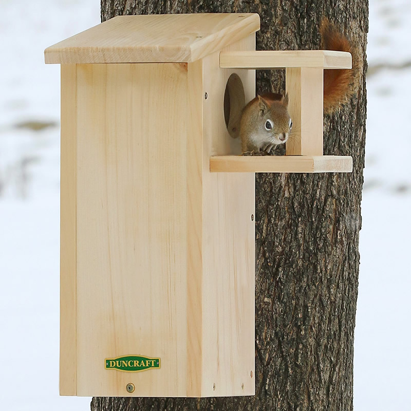 Duncraft Com Duncraft Squirrel House With Predator Guard