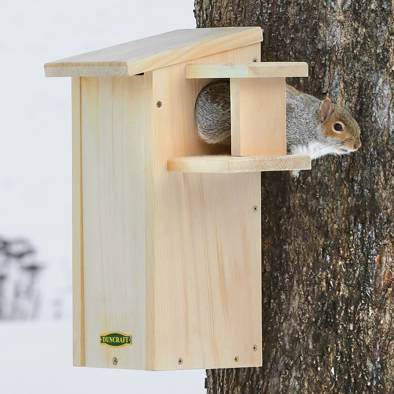 Squirrel Houses For Sale House Plan 2017