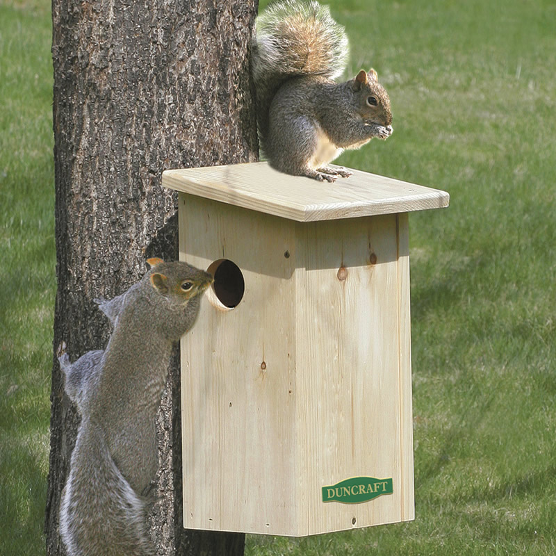 Outstanding Duncraft Squirrel House Beutiful Home Inspiration Ommitmahrainfo