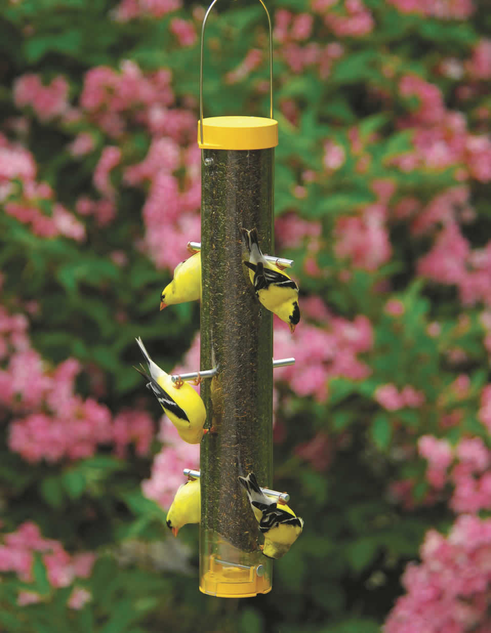 introduction feeders squirrel finch feeder id proof large