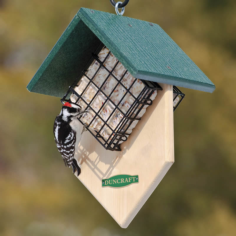 Duncraft Com Duncraft Double Woodpecker Suet Feeder