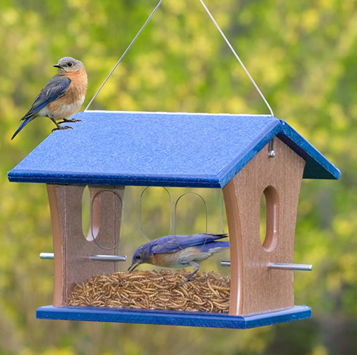 birds feeders feeder bluebird protected p at wild backyard