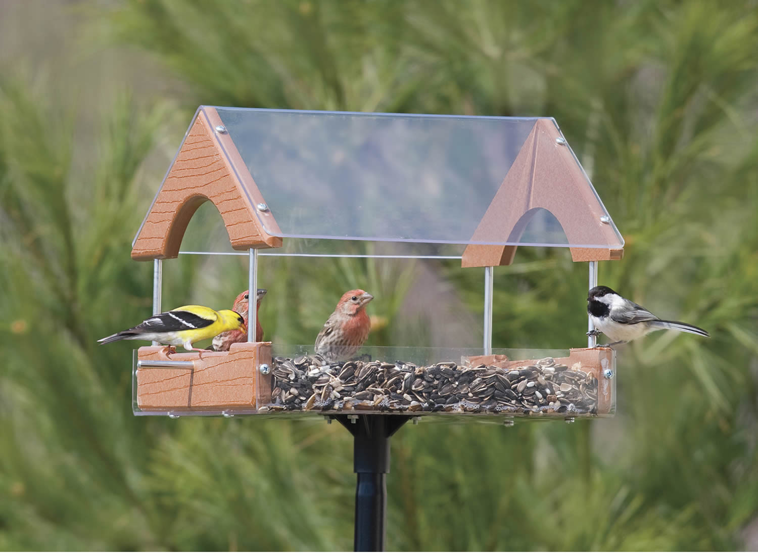 mounted choice feeder bird pole mealworm house birds