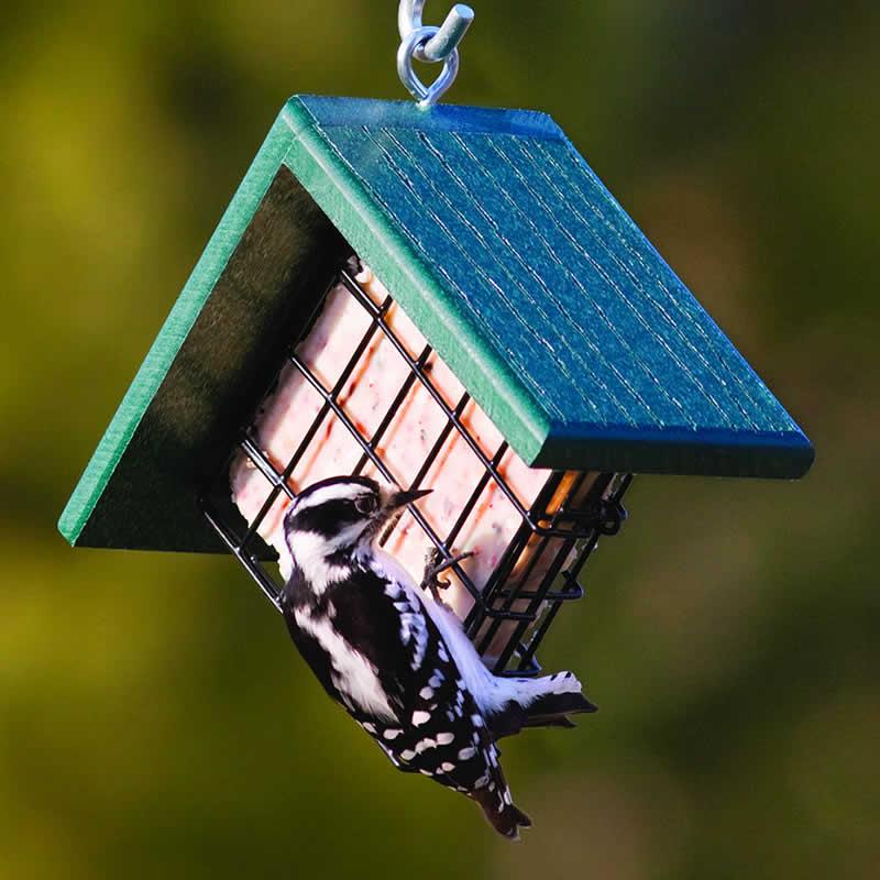 Duncraft Com Woodpecker Suet Feeder
