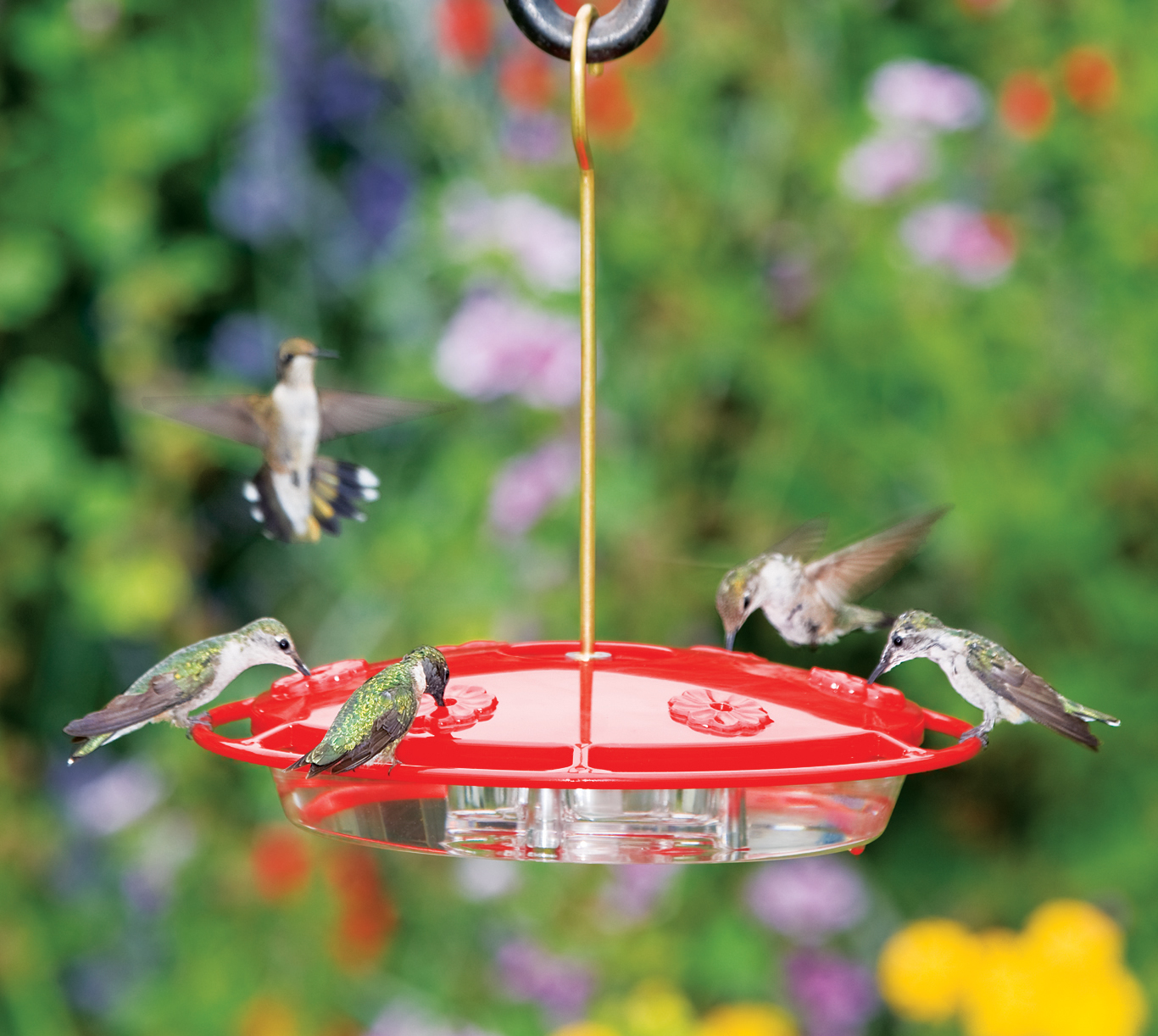 youtube hanging feeder watch hummingbird