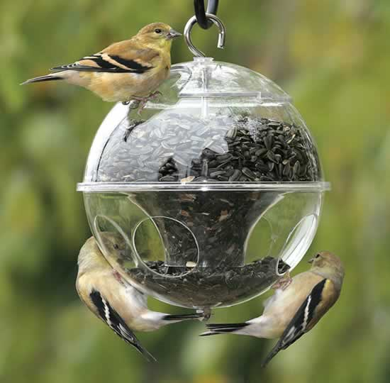 Deshacerse de los mirlos, consejos sobre cómo deshacerse de los estorninos, Grackles y otras aves pesky en su patio en Songbird Garden