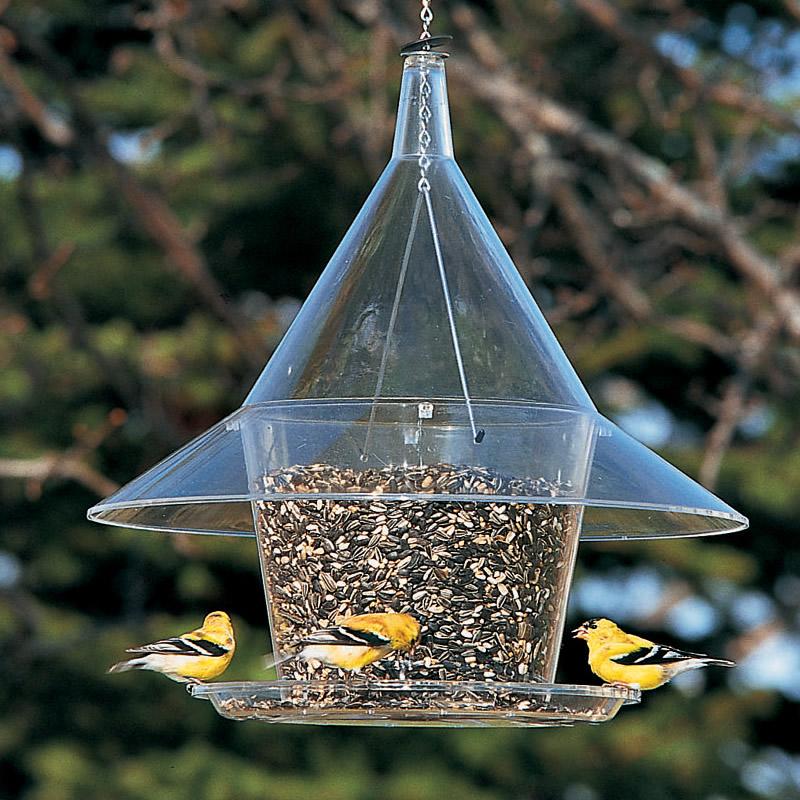 Es hora de poner casas de pájaros | Servicio de Extensión de la Universidad Estatal de Oregon | Jardinería
