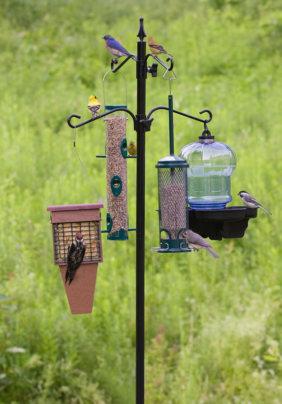 Duncraft Com Deluxe Bird Feeding Station