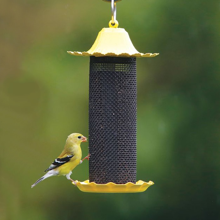 Duncraft Com Little Bit Finch Feeder
