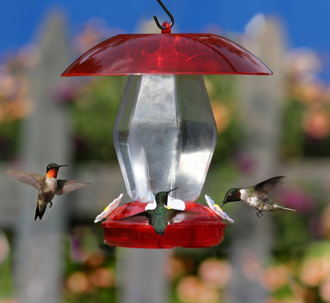 spill no garden perky product pet shelmerdine center hummingbird humingbird feeder