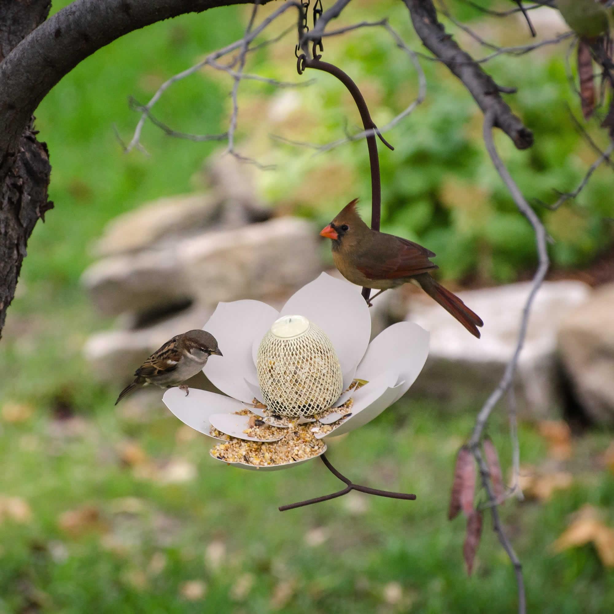 pics gamingdaddyoftwo wild perky bird x pet feeder com evenseed proof squirrel beautiful silo