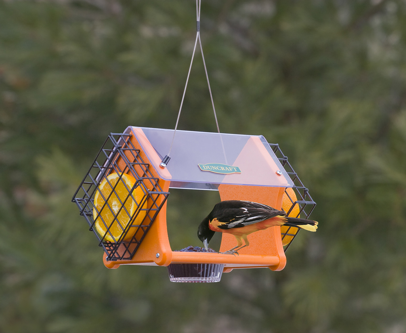 duncraft com duncraft eco delight oriole feeder with cages