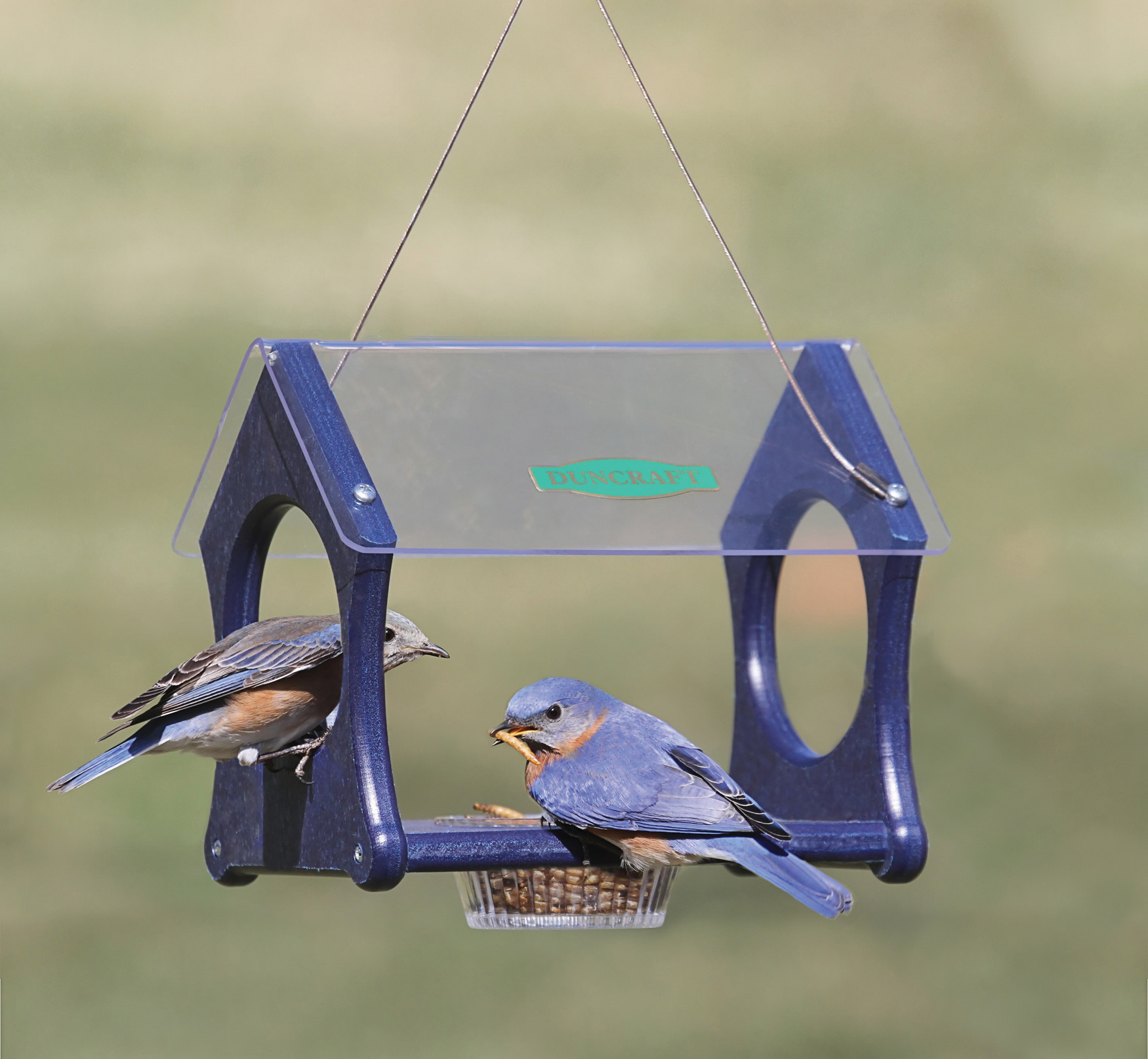 feeder watch bluebird bird feeders or youtube oriole blue