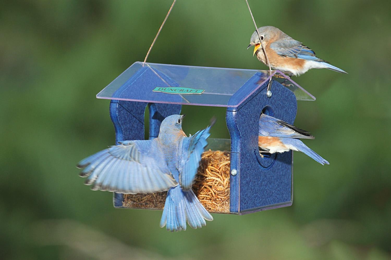 Duncraft Com Classic Bluebird Feeder