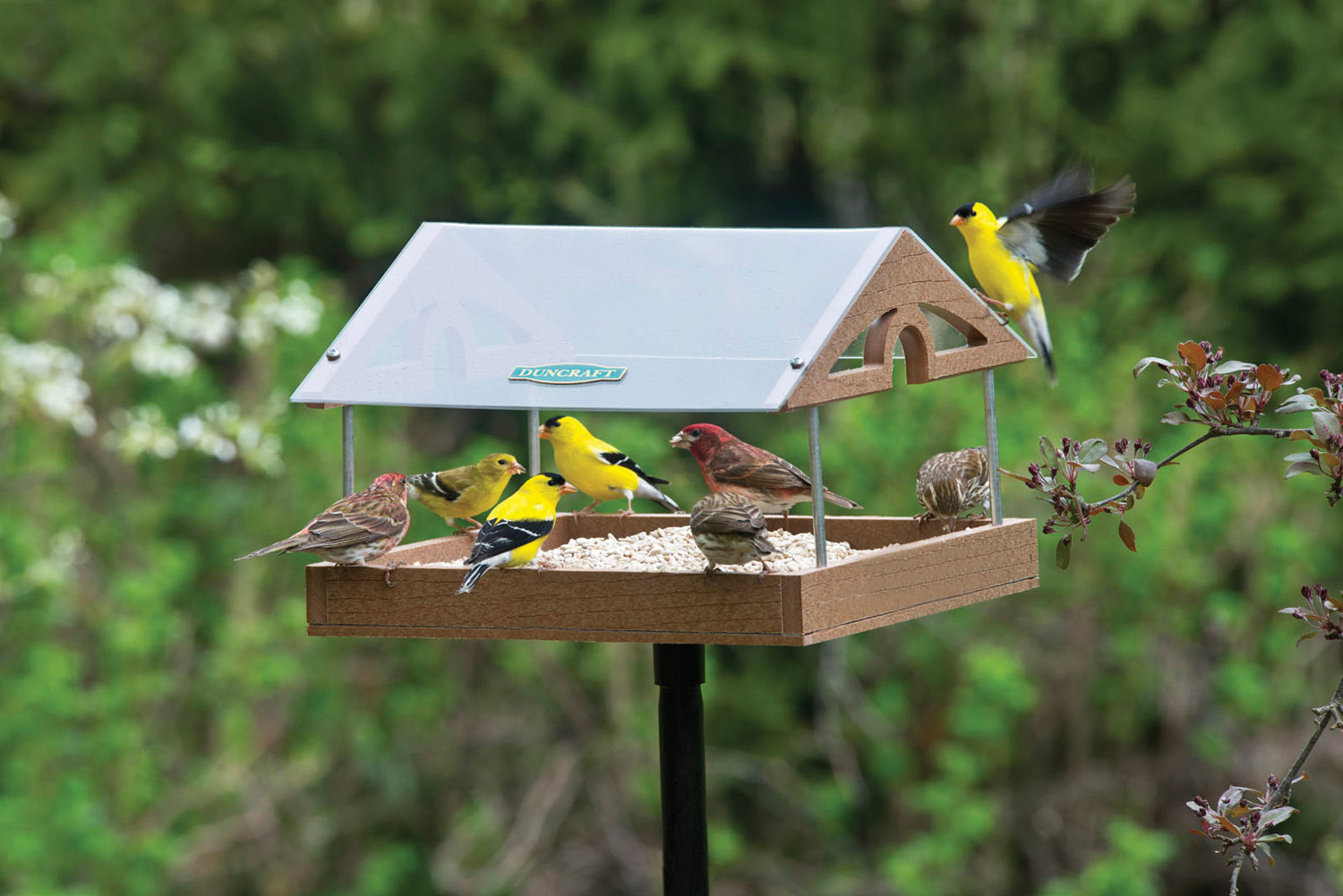 pleasantnature feeder acrylic window products feeders image bird