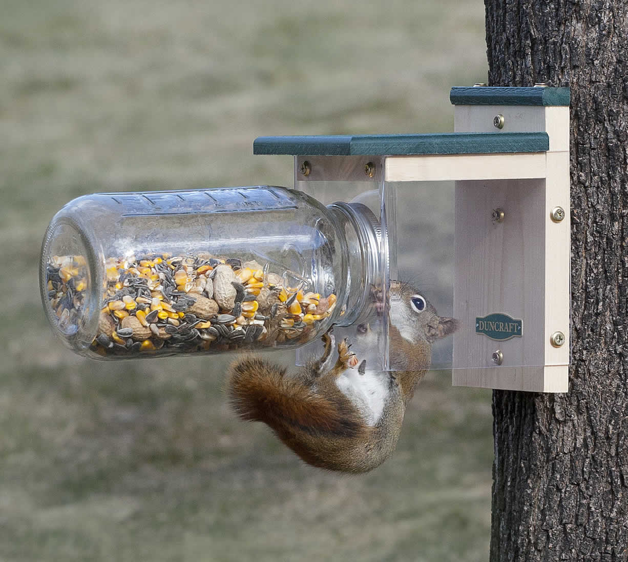 Duncraft Com Duncraft Down Under Squirrel Jar Feeder
