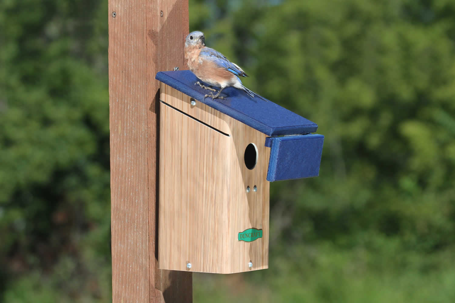 What Makes Bluebird Happiness Happy besides Bluebird House With Wren Shield further Housing besides Birdhouse Free Bluebird House Plans as well View. on pvc bluebird house plans