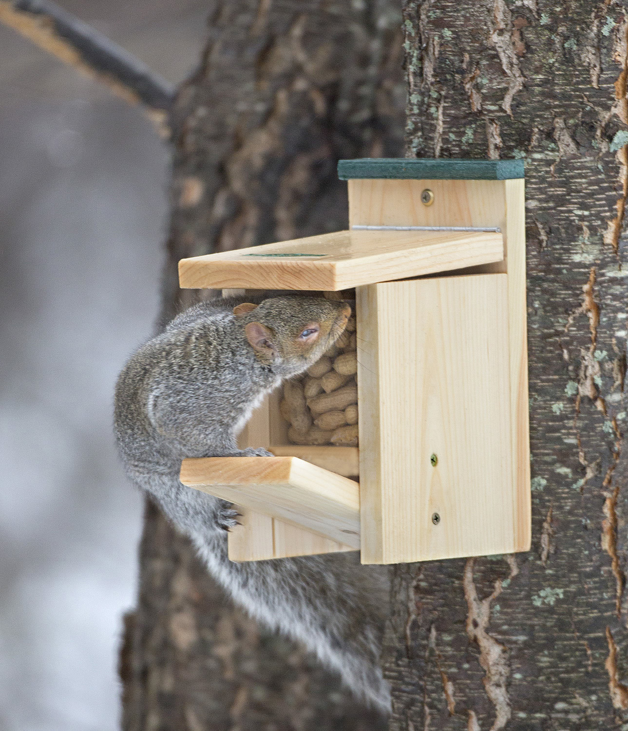 Duncraft Com Duncraft Jack In The Box Squirrel Feeder