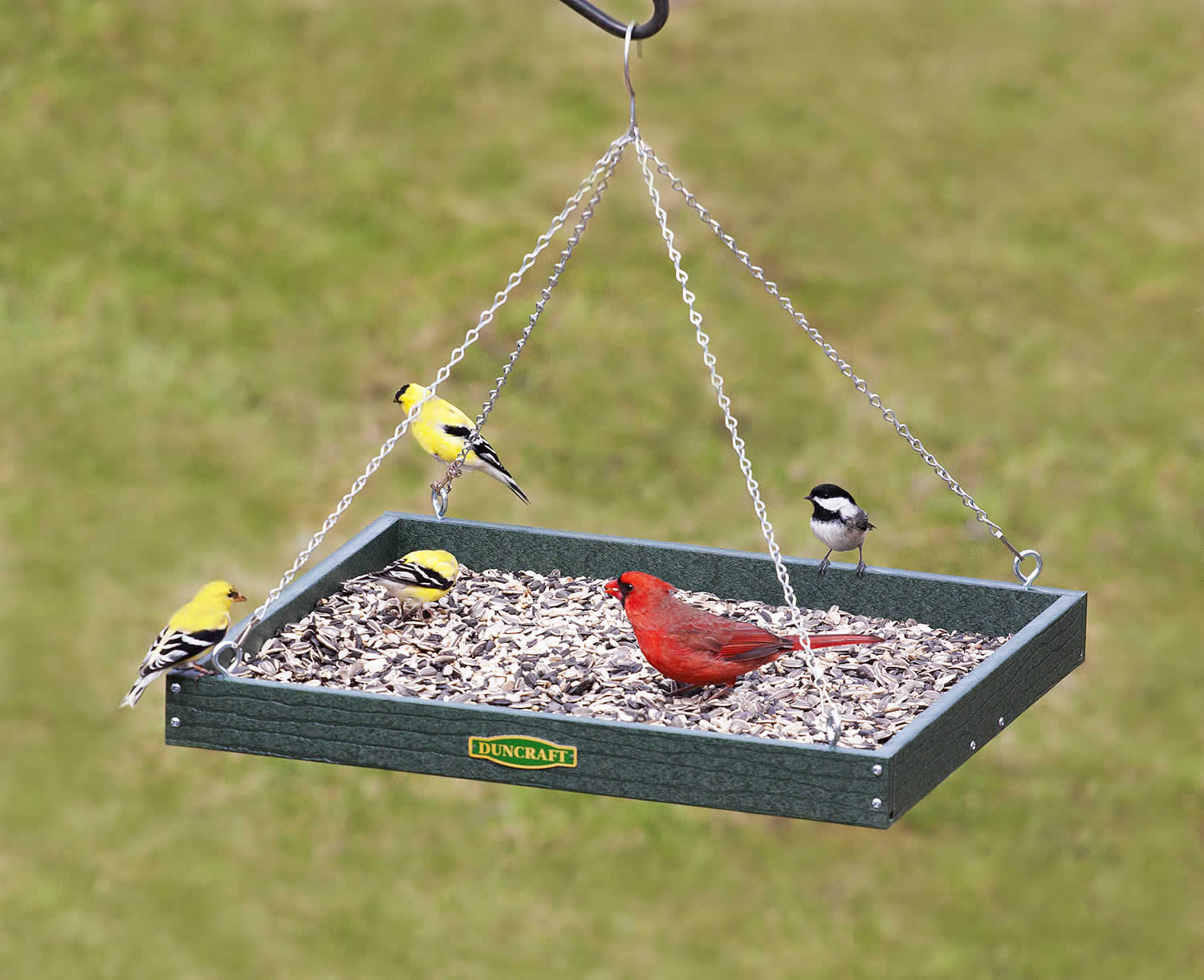 feeders plans peanut feeder bird covered attachment