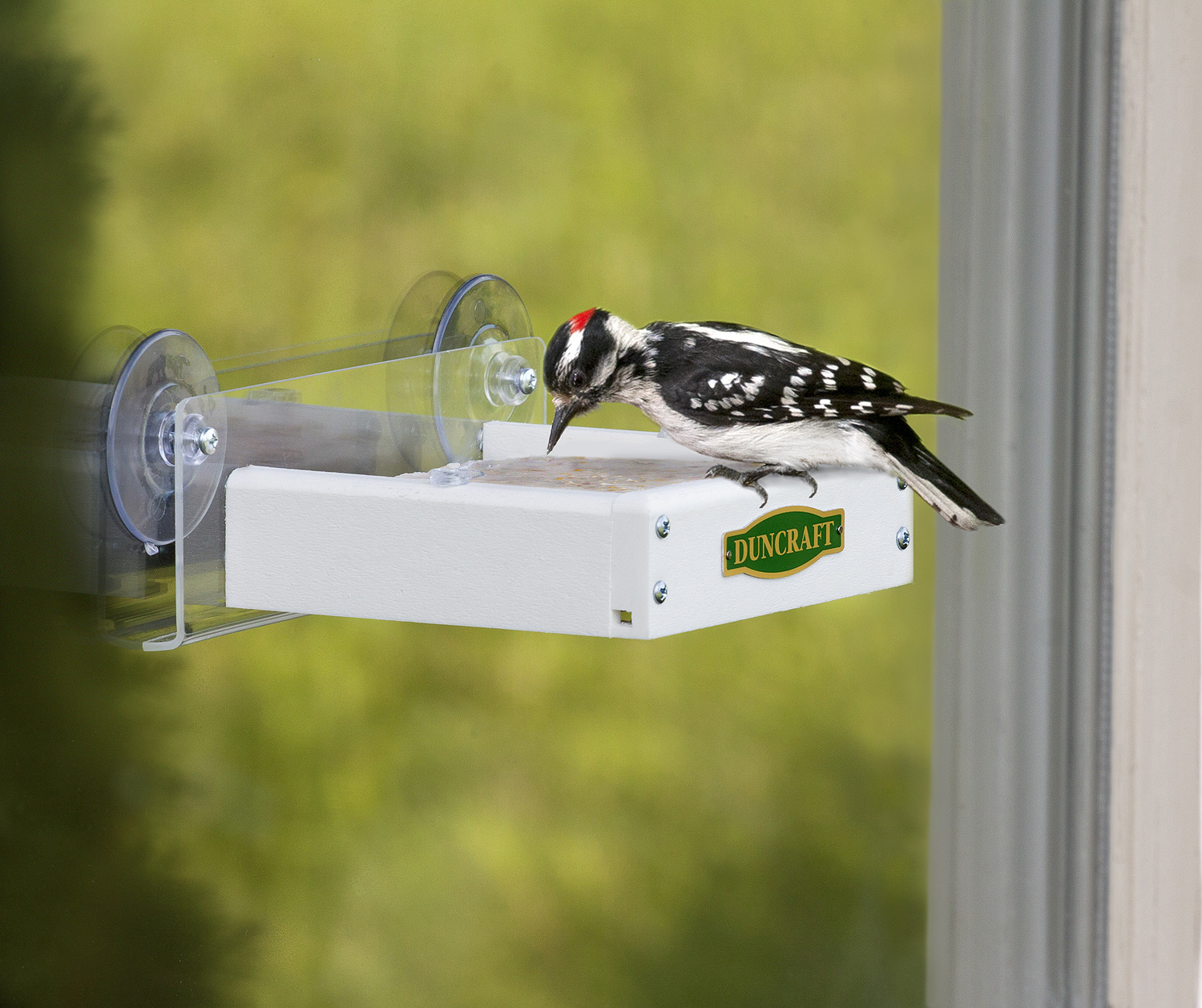 Duncraft Com Duncraft Touch Free Window Suet Feeder