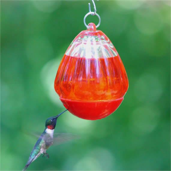 Wonderful Round Glass Hummingbird Feeder