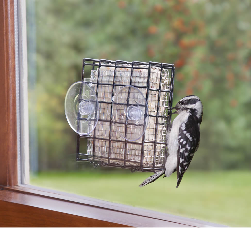 Duncraft Com Window Suet Shield Blocker Feeder