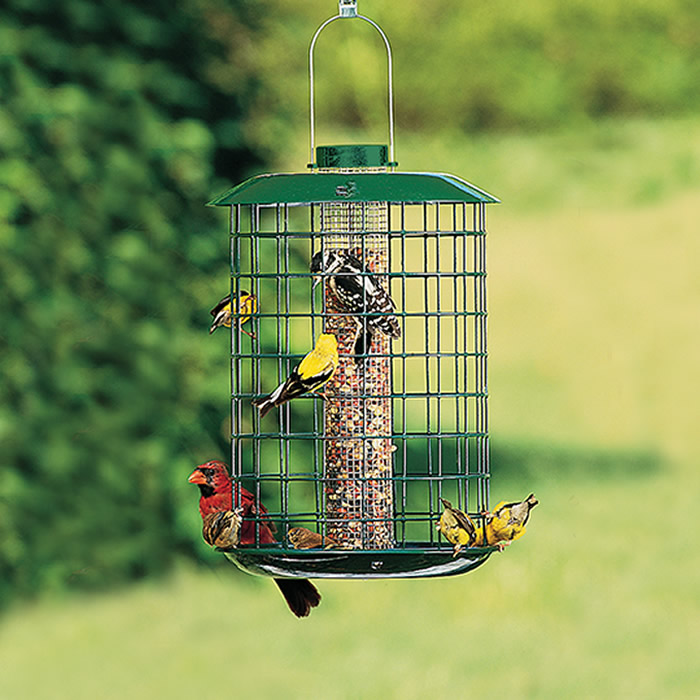Bluebird house pole for Song bird house plans