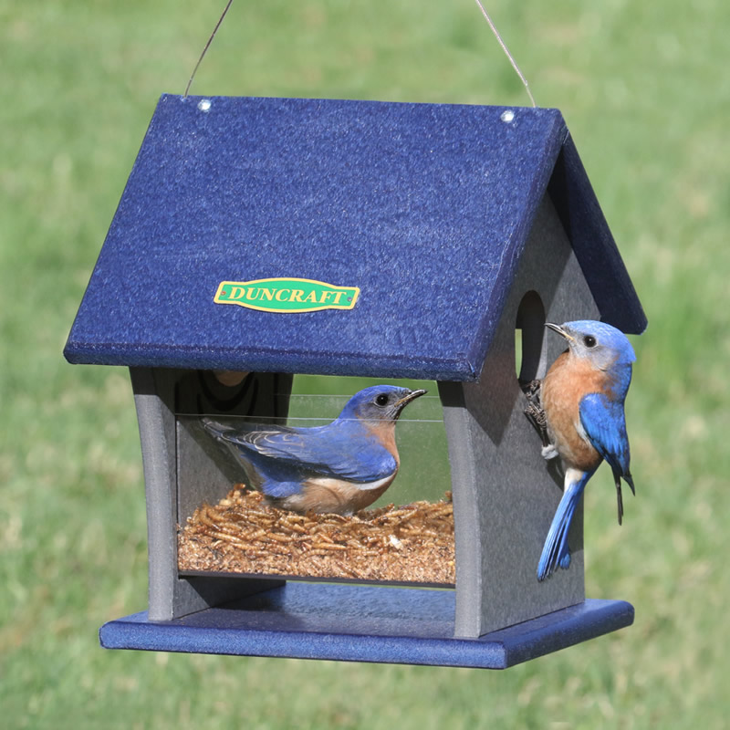 farms asp quality feeder bluebird feeders crafted live creek fiddle at for prodlist feeding bluebirds mealworms to scripts store