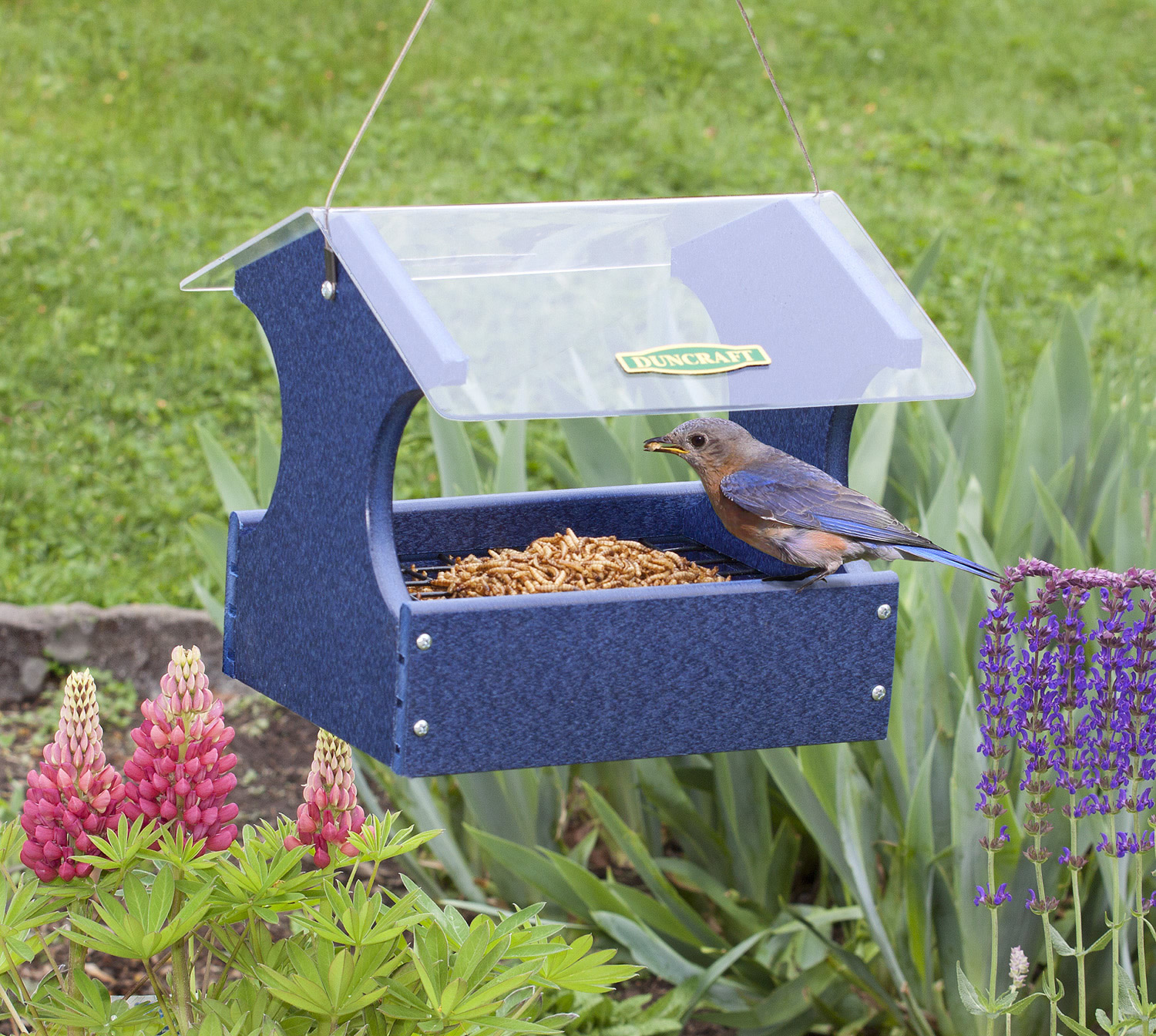 feeders backyard birds collection bird chirper great blue and choice seed supper bluebird mealworm prices feeder suet dome