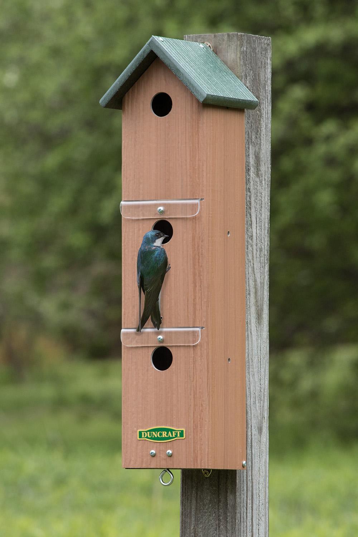 Duncraft Com Duncraft Swallow Amp Sparrow Colony Nest Box