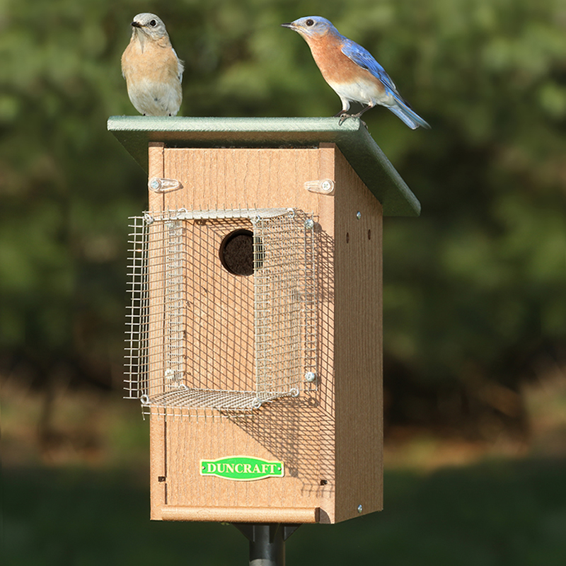 Swallow bird house plans free for Types of birdhouses for birds
