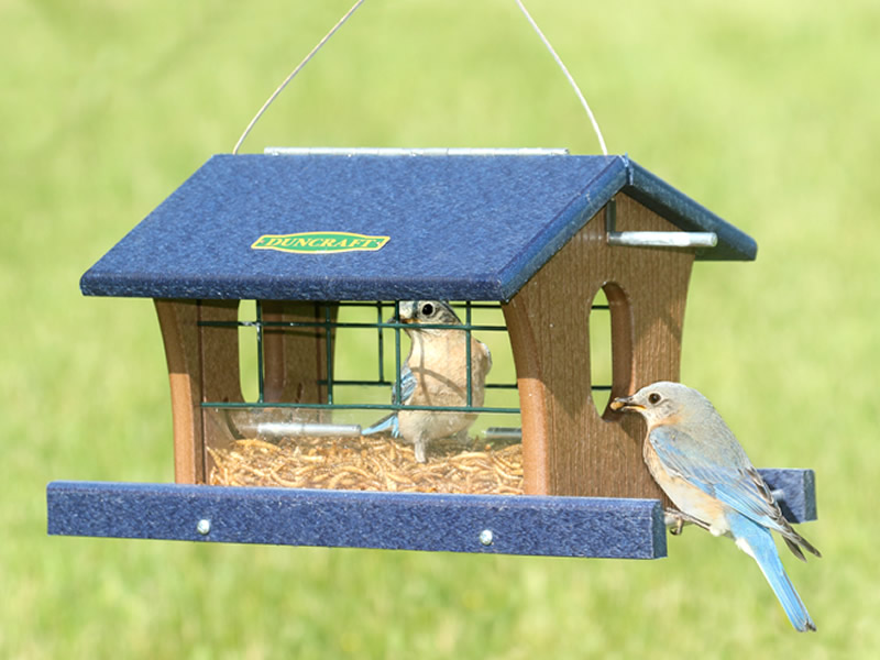 feeder bluebird feeders crafts how a feltmagnet make plans to eastern